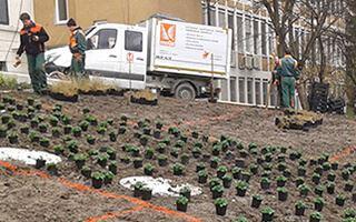 Pflanzung und Gartengestaltung