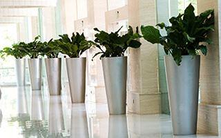 Notranje dekoriranje in cvetličarstvo
