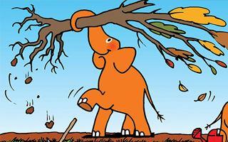 Zgodba o oranžnem slonu