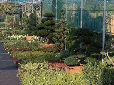 Vrtni center MOGA