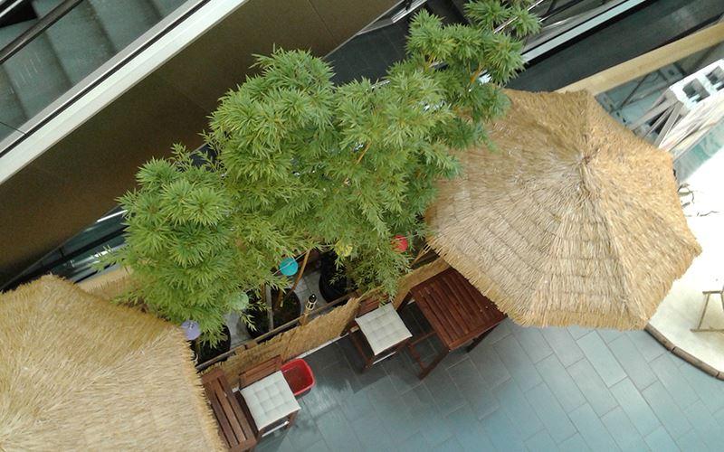 Verleih von Pflanzen