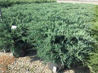 Pokrovne rastline