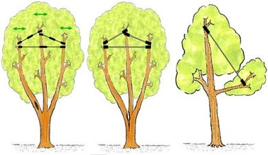 Picture for category Tree cabling system