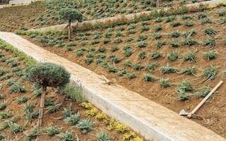 Sajenje in urejanje okolja