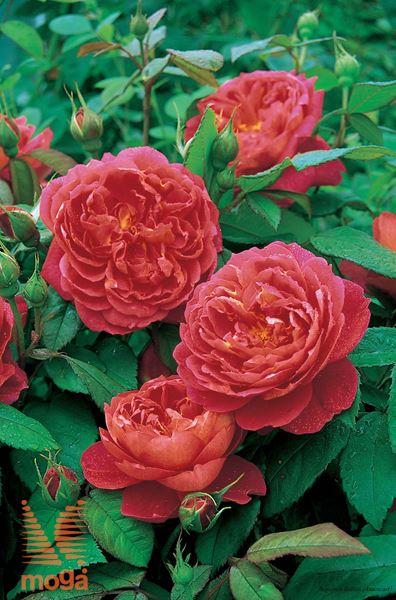 "vrtnica ""Benjamin Britten"""
