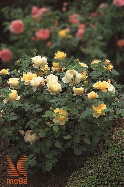 "vrtnica ""Charles Darwin"""