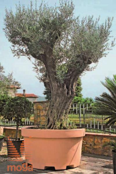 Lonec Lira Urban |Siena|FI: 155/140 cm x V: 90 cm|Vol: 1100 L|