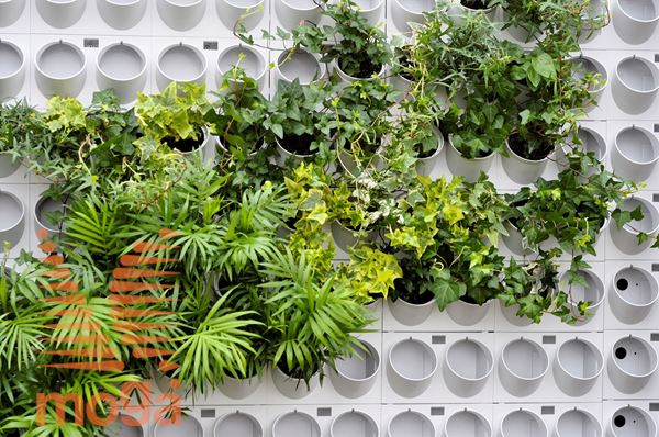 Picture of Modules for green walls