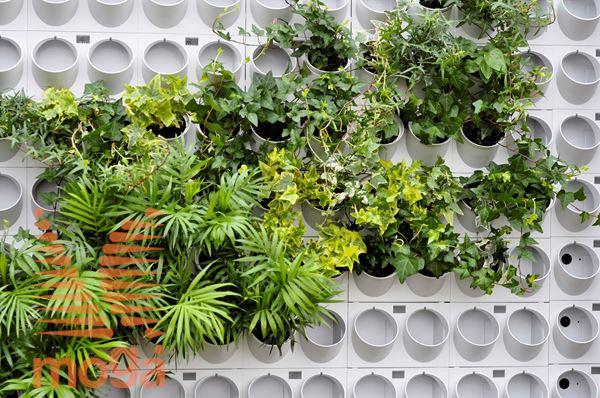 Bild von Module für grüne Wände