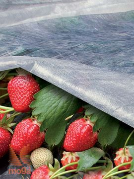 Slika Koprena pokrivalka za rastline Ortoclima|bela|17g/m2|
