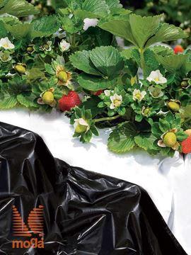 Slika Folija za jagode/vrtnine |črna|40 µ|