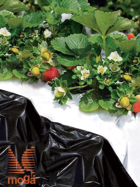 Folija za jagode/vrtnine |črna|40 µ|